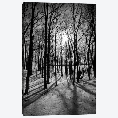 Forest on the Oak Ridges Moraine Canvas Print #11073} Canvas Wall Art
