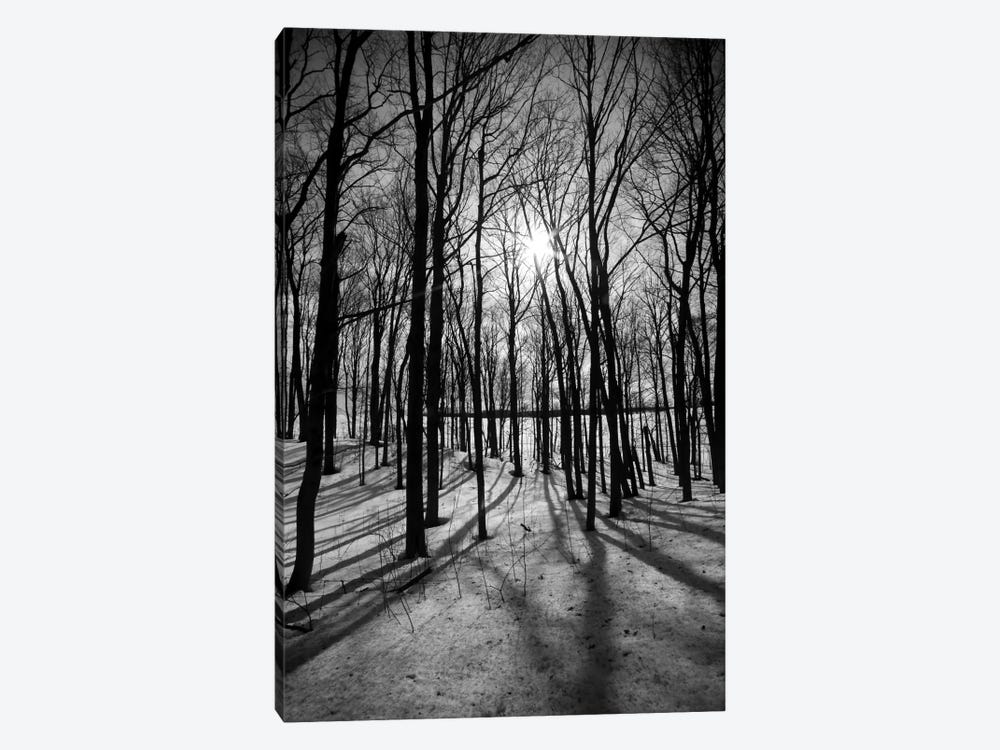 Forest on the Oak Ridges Moraine 1-piece Canvas Wall Art
