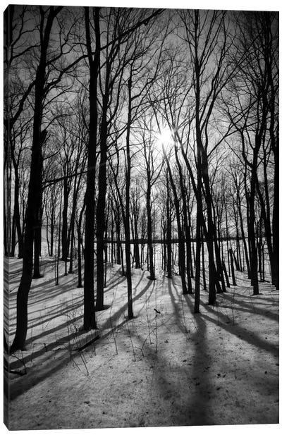 Forest on the Oak Ridges Moraine Canvas Art Print