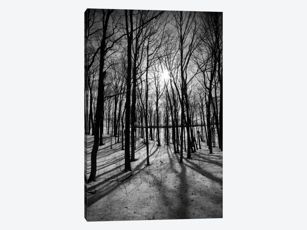 Forest on the Oak Ridges Moraine by Unknown Artist 1-piece Canvas Wall Art