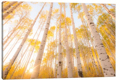 Colorado Canvas Art Print