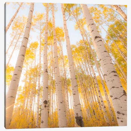 Colorado #2 Canvas Print #11500B} by Dan Ballard Canvas Art