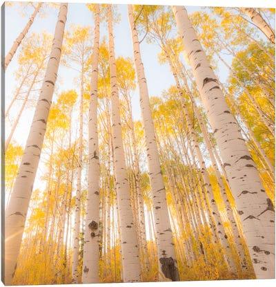 Colorado #2 Canvas Print #11500B
