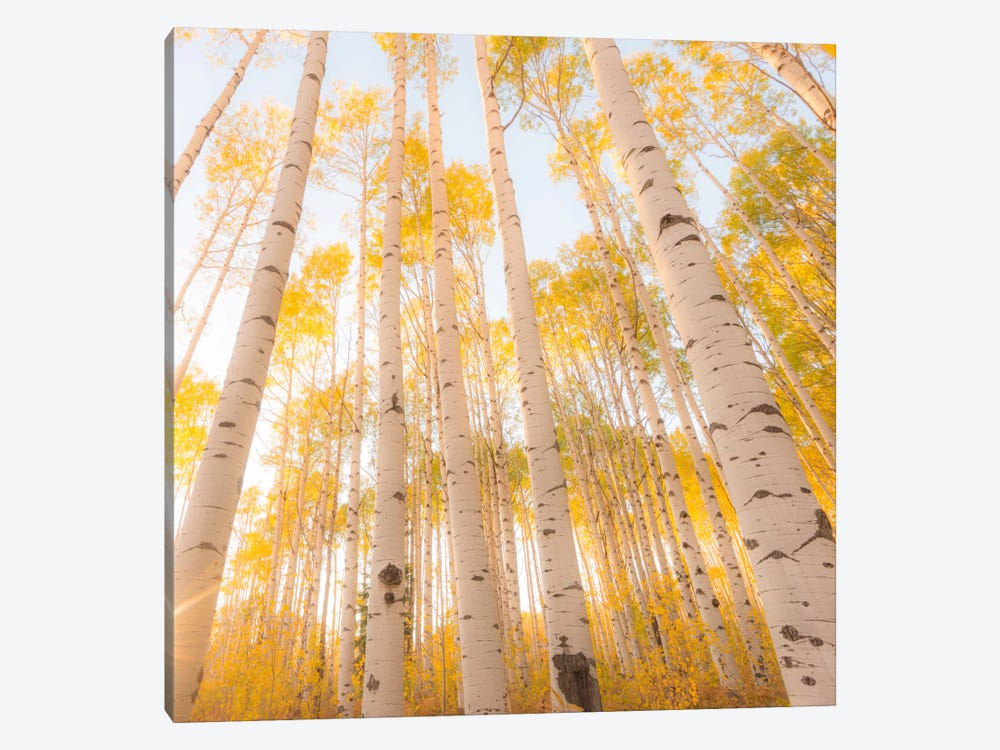 Colorado #2 by Dan Ballard 1-piece Canvas Print