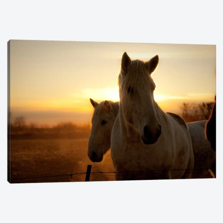Brisk Morning Canvas Print #11503} by Dan Ballard Canvas Art
