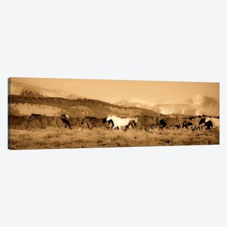 One Canvas Print #11513} by Dan Ballard Canvas Print