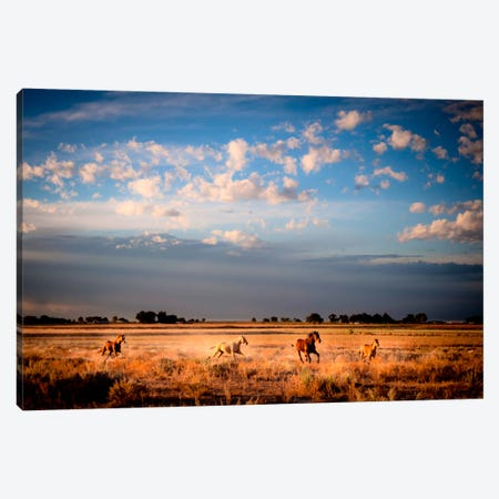 Open Spaces Canvas Print #11516} by Dan Ballard Canvas Art