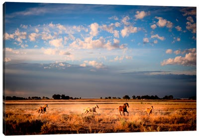 Open Spaces Canvas Art Print