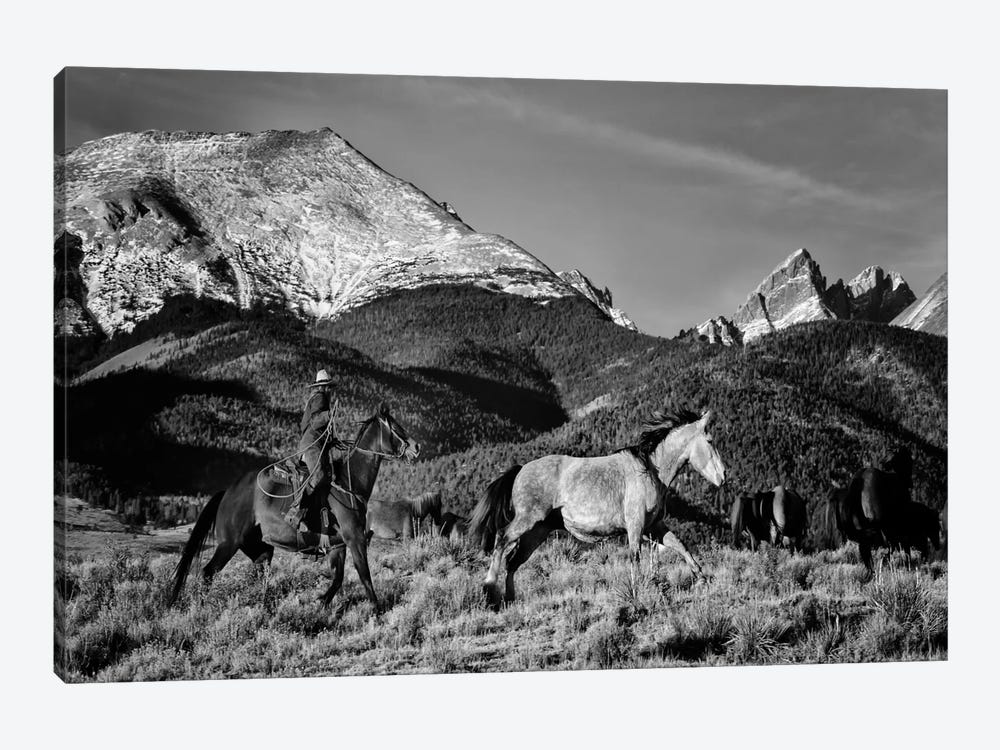Roping in the San Greys by Dan Ballard 1-piece Canvas Wall Art