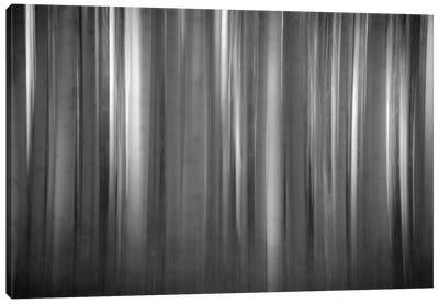 Aspen Form Canvas Print #11541