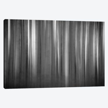 Aspen Form 3-Piece Canvas #11541} by Dan Ballard Canvas Art