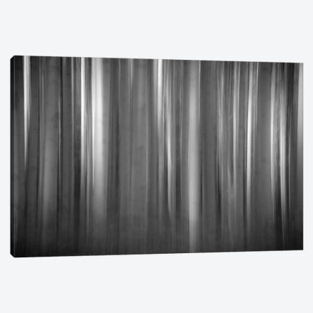 Aspen Form Canvas Print #11541} by Dan Ballard Canvas Art