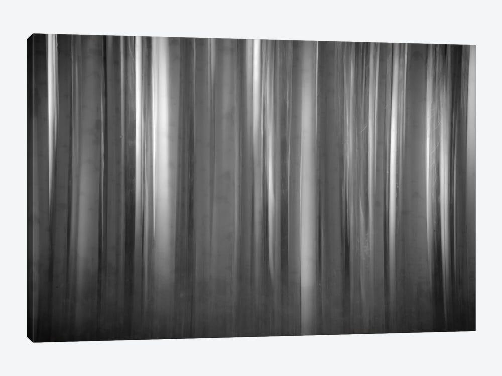 Aspen Form by Dan Ballard 1-piece Canvas Print