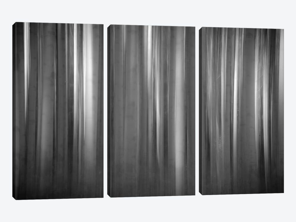 Aspen Form by Dan Ballard 3-piece Canvas Print