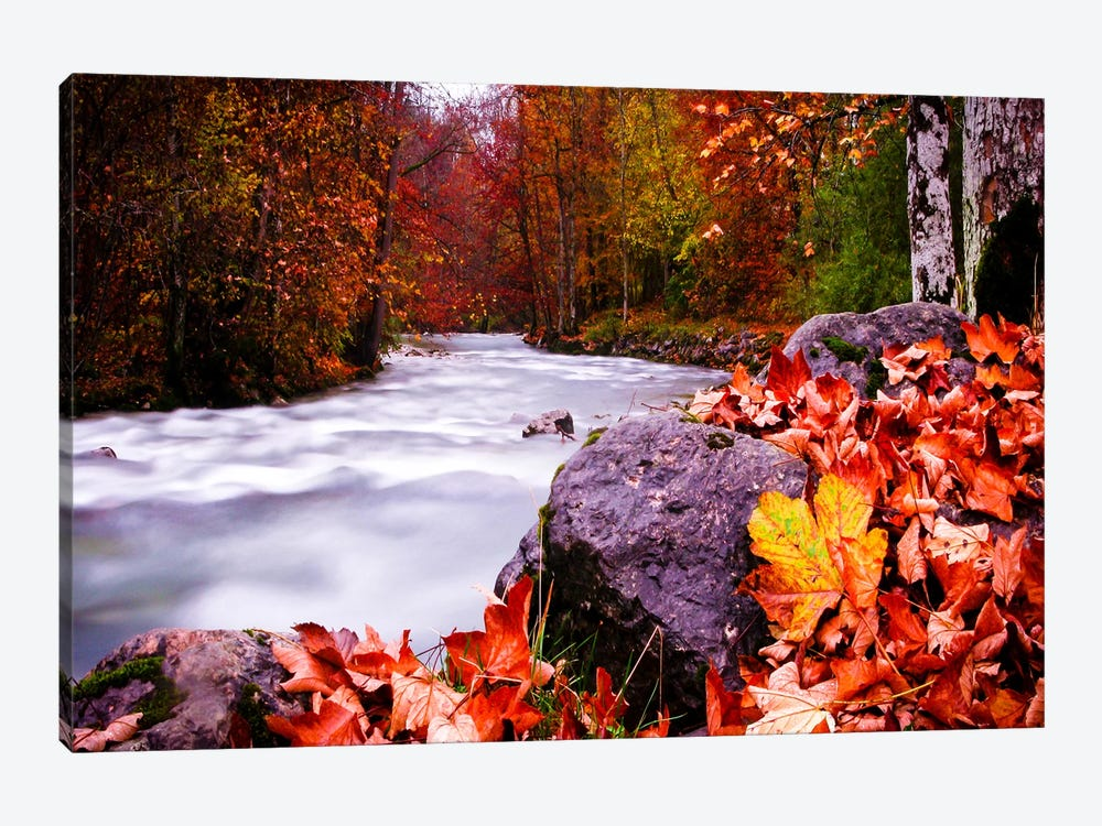 Autumn Flow by Dan Ballard 1-piece Canvas Print