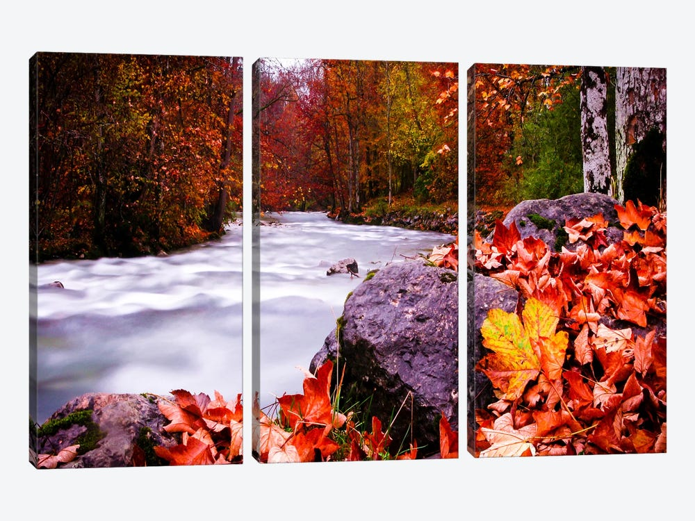 Autumn Flow by Dan Ballard 3-piece Art Print