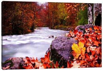 Autumn Flow Canvas Art Print