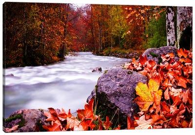 Autumn Flow Canvas Art Print