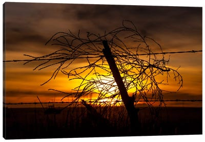 Blowing in the Wind Canvas Print #11548
