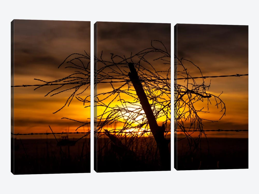 Blowing in the Wind 3-piece Canvas Artwork