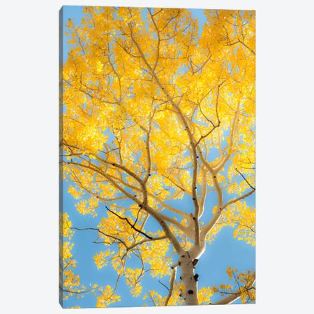 Change Canvas Print #11550} by Dan Ballard Canvas Art Print