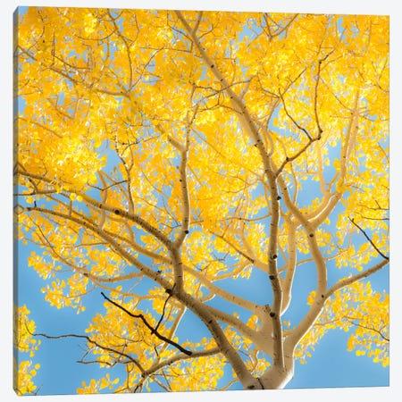 Change #2 Canvas Print #11550B} by Dan Ballard Canvas Art Print