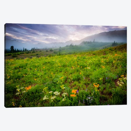 Colorado Flowers Canvas Print #11551} by Dan Ballard Canvas Art Print