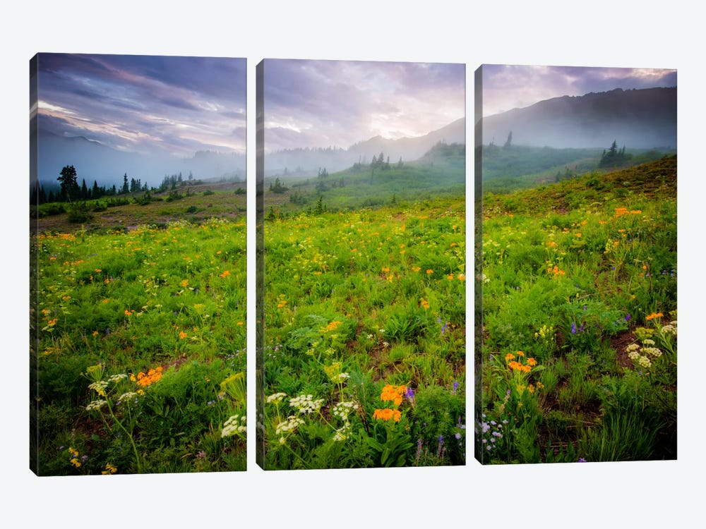 Colorado Flowers by Dan Ballard 3-piece Canvas Wall Art