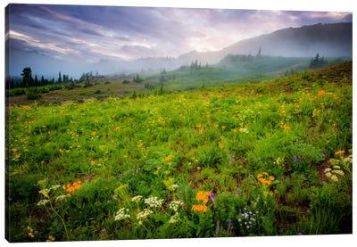 Colorado Flowers Canvas Art Print