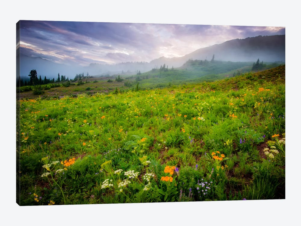 Colorado Flowers by Dan Ballard 1-piece Canvas Art