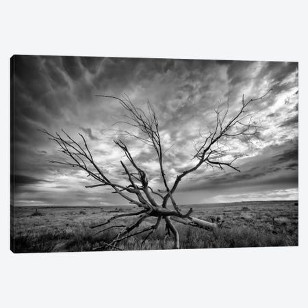 Colorado Storm Canvas Print #11553} by Dan Ballard Art Print
