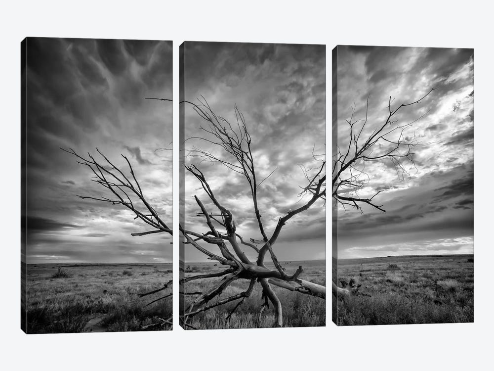 Colorado Storm by Dan Ballard 3-piece Canvas Wall Art