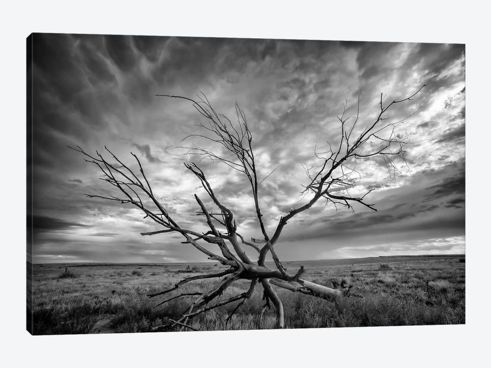 Colorado Storm by Dan Ballard 1-piece Canvas Artwork