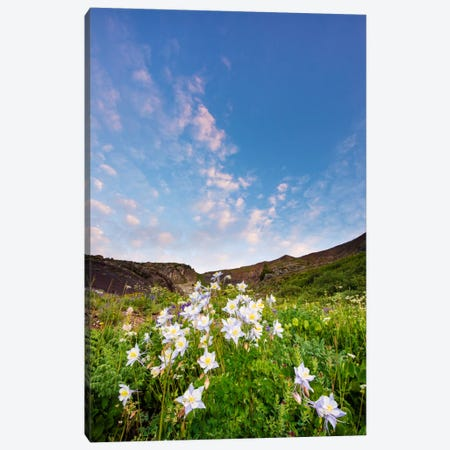 Columbine Morning I Canvas Print #11554} by Dan Ballard Canvas Wall Art