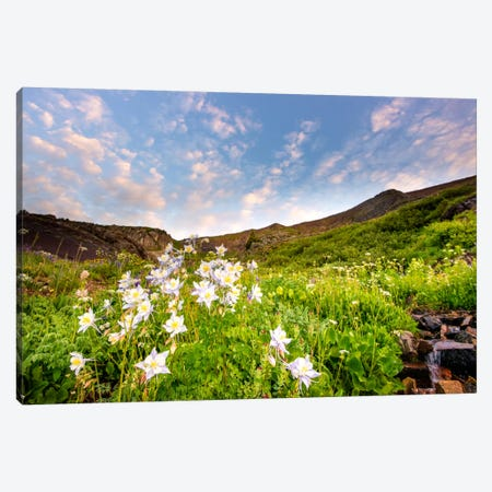Columbine Morning ll Canvas Print #11556} by Dan Ballard Canvas Artwork