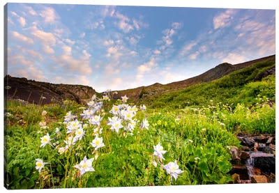Columbine Morning ll Canvas Art Print