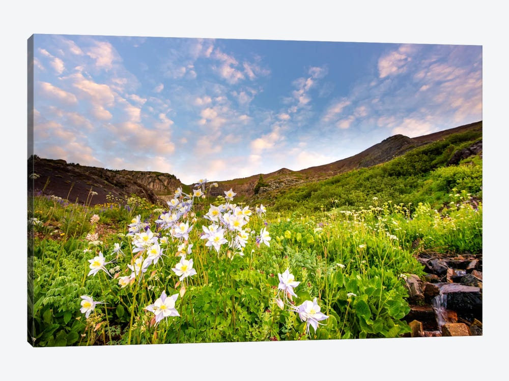 Columbine Morning ll by Dan Ballard 1-piece Art Print