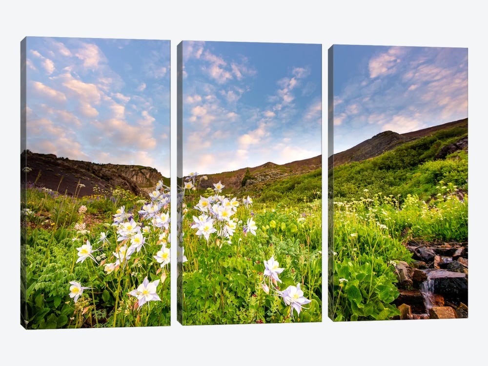 Columbine Morning ll 3-piece Art Print