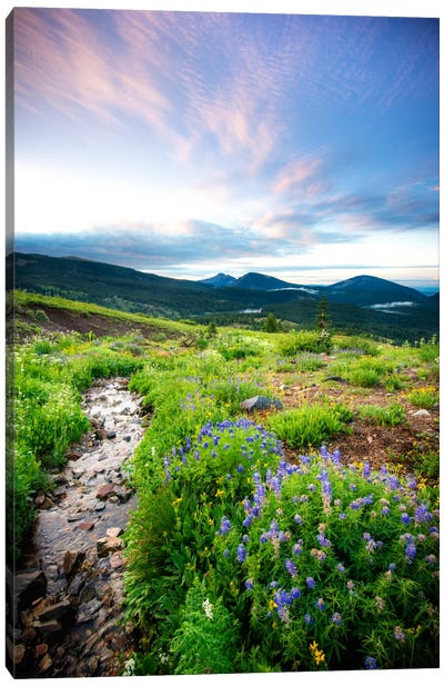 Crested Butte Stream Cavnas Print Canvas Art Print