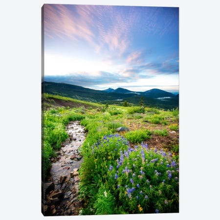 Crested Butte Stream Cavnas Print Canvas Print #11557} by Dan Ballard Canvas Art