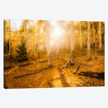Fall Light Canvas Print #11570} by Dan Ballard Canvas Art Print