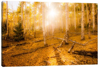 Fall Light Canvas Print #11570