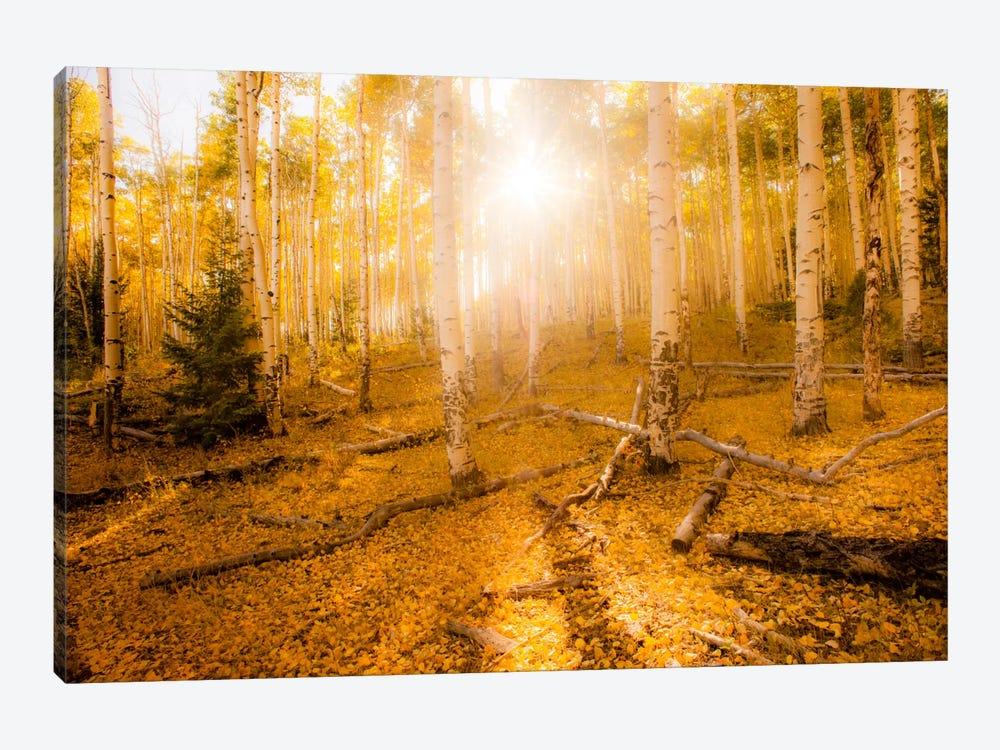 Fall Light by Dan Ballard 1-piece Art Print