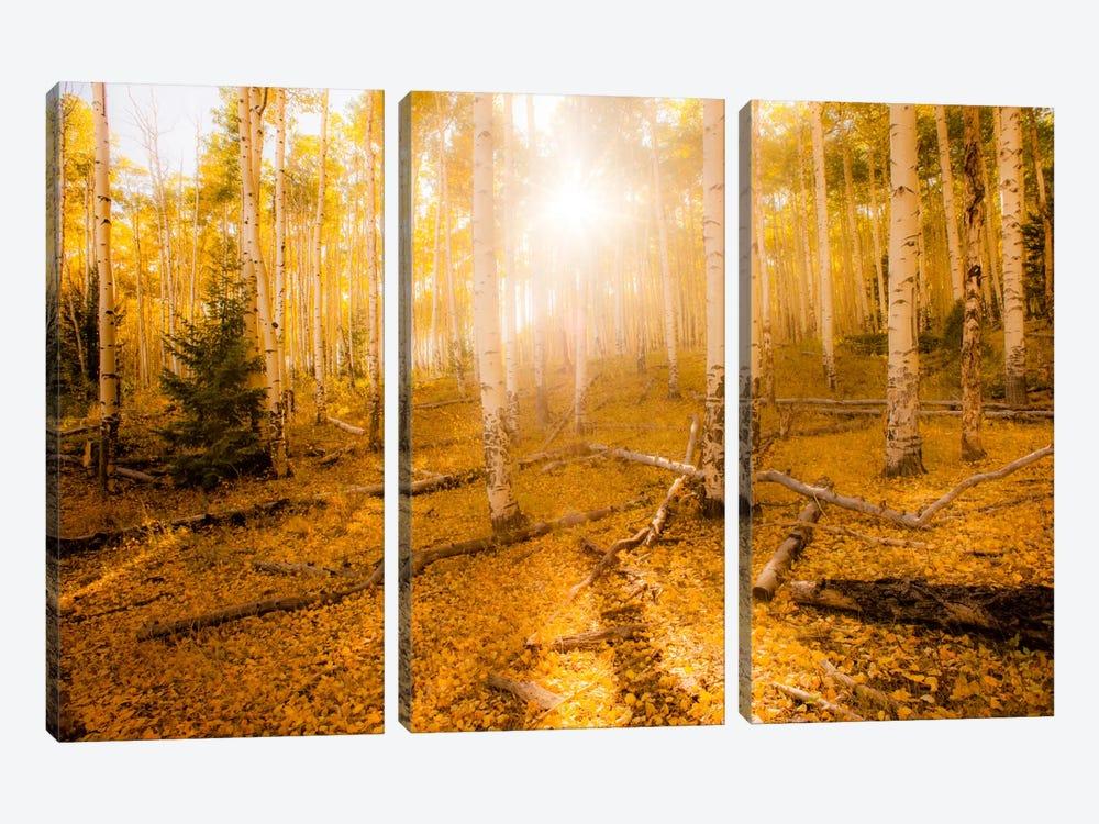 Fall Light by Dan Ballard 3-piece Art Print