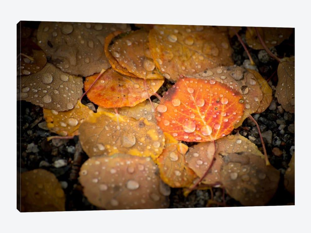 Fall Rains by Dan Ballard 1-piece Canvas Artwork