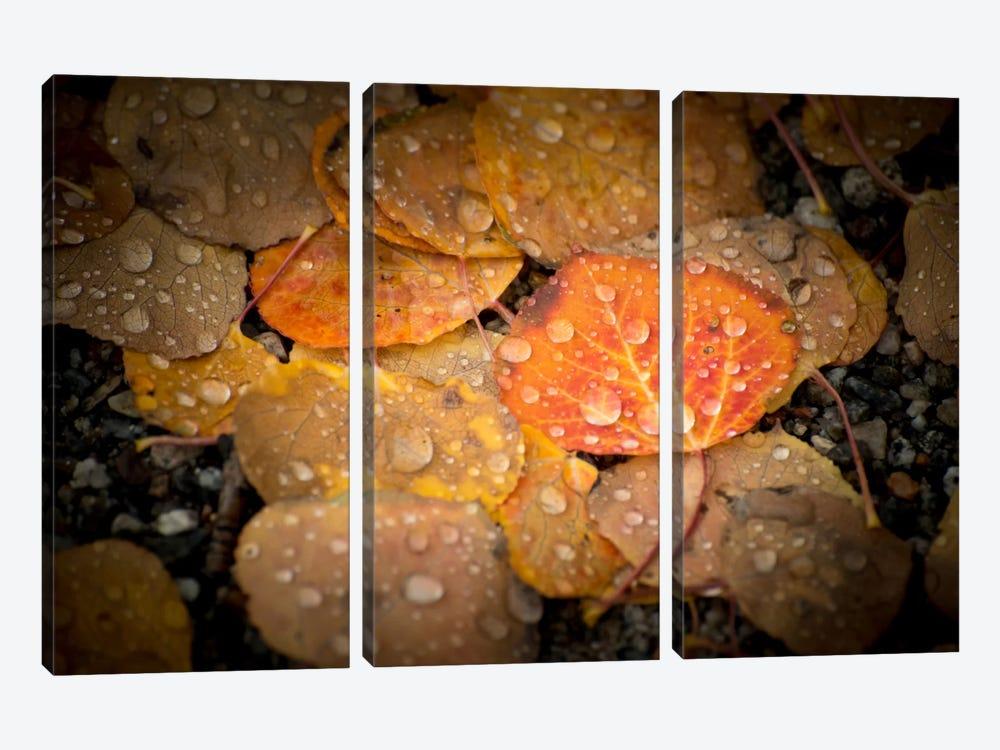 Fall Rains by Dan Ballard 3-piece Canvas Art