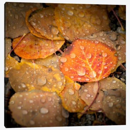 Fall Rains #2 Canvas Print #11571B} by Dan Ballard Canvas Artwork