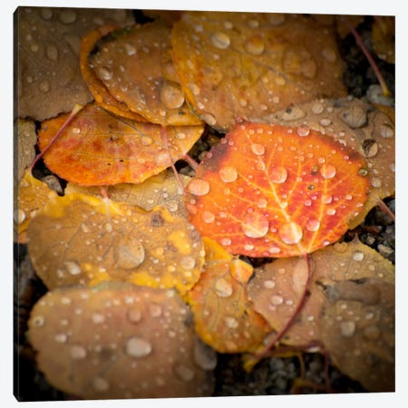 Fall Rains #2 Canvas Print #11571B} by Dan Ballard Canvas Artwork
