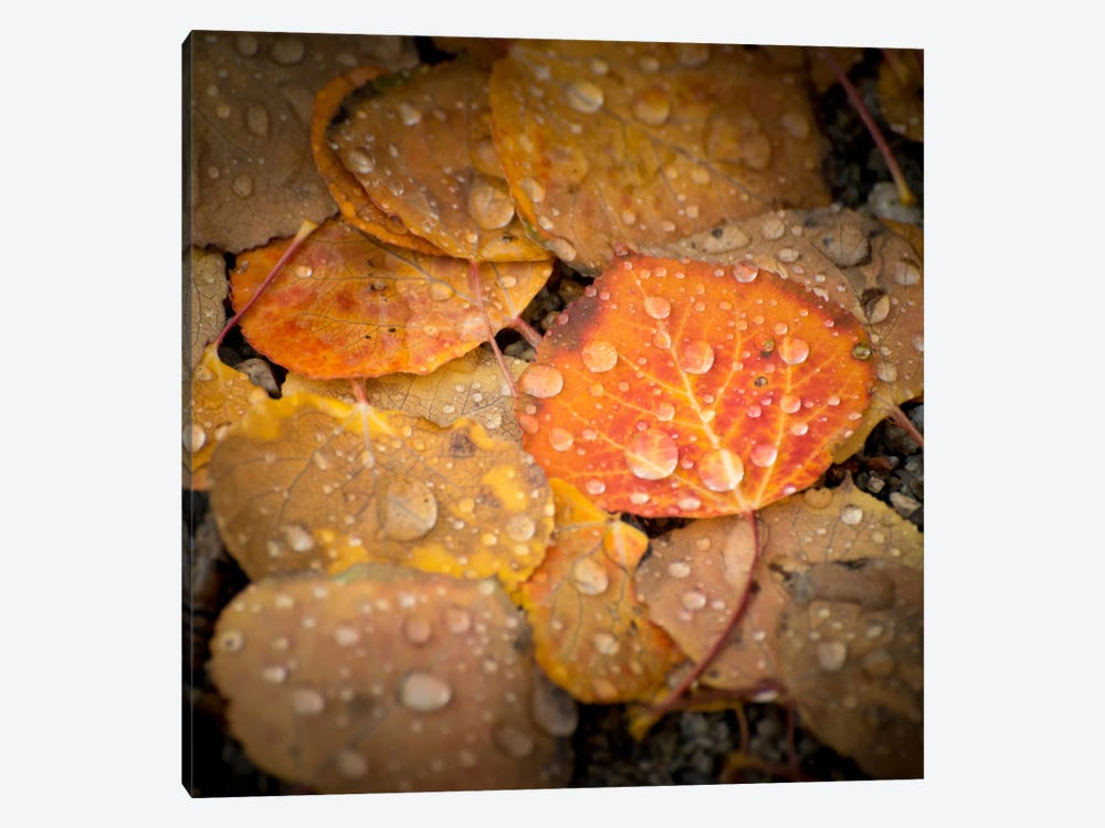 Fall Rains #2 1-piece Canvas Print