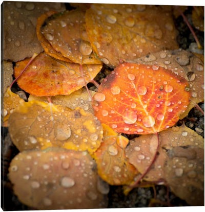 Fall Rains #2 Canvas Art Print